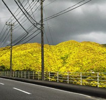 奄美は新緑の季節