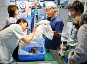 奄美動物病院(奄美市)が出張診察140505沖