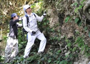 喜界島で隆起サンゴ調査写真20140531 丸山