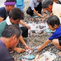 大人の手ほどきを受け、追い込み漁で取れた魚をさばく児童ら=29日、奄美市名瀬の芦花部海岸