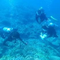 サンゴ礁の健康状態などを調査する参加者=21日、与論町茶花沖