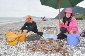 漁が解禁となり、新鮮なウニが水揚げされた=1日、龍郷町安木屋場