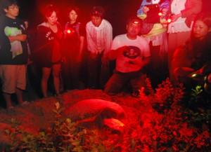 アカウミガメの産卵を静かに見守る観察会参加者=30日、龍郷町安木屋場の渡連海岸