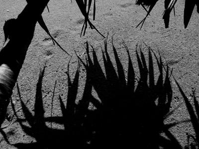 写真の部最優秀賞、森美佐子さんの「影が来る!!」