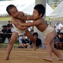 【個人6歳児未満決勝】会場を沸かせた豆力士の好取組=18日、太陽が丘総合運動公園相撲場