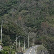 奄美市から大和村へと続く県道。上りとなる道路正面の左側に奄美市側のトンネル坑口が設けられる予定だ=7日、奄美市名瀬根瀬部