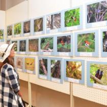 南西諸島の特徴的な野鳥を集めた巡回写真展=7日、奄美市
