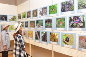 南西諸島の鳥200展141007奄美文化センター