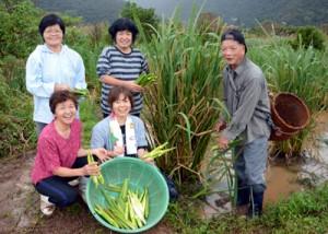 マコモの初収穫を喜ぶこめ米倶楽部のメンバーと南さん(右)=8日、奄美市名瀬