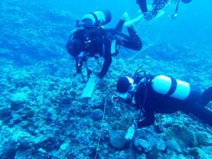 サンゴ礁の健康状態を調査したリーフチェック=8日、与論町供利港沖(ヨロンリーフチェックプロジェクト提供)