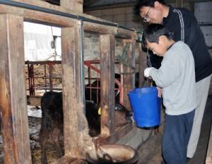 子牛にミルクを与える参加者=20日、和泊町畦布