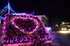 奄美市名瀬小宿里の知名瀬トンネルに向かう道路沿い。趣味や気の合う仲間でつくる「土日会・喜和楽」が5年前から。「見どころは花と光のコラボレーション。昼間見ても楽しめます」と大山利一代表