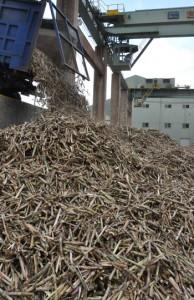 製糖がスタートし工場に搬入される原料キビ=8日、徳之島町