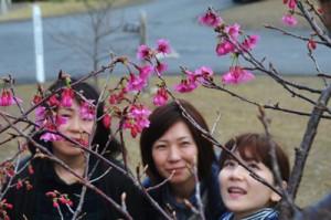 開花宣言されたヒカンザクラ=8日、龍郷町の長雲峠