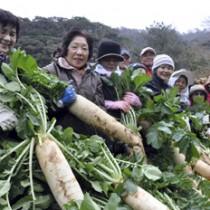 収穫したアッタドコネを手にする女性たち=17日、奄美市名瀬有良