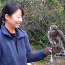 伊藤さんの元から野生復帰を目指して飛び立ったサシバ=15日、龍郷町