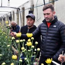 スプレーマムのほ場で生産者から話を聞くバーグマン氏(右から2番目)=28日、和泊町