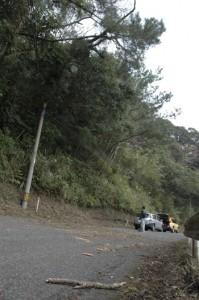 枯れ松の倒木があった現場。大部分は道路上の他の木の枝に残っている=22日午後2時ごろ、奄美市名瀬