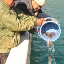 スジアラを放流するすみよう漁業集落のメンバーと稚魚=9日、奄美市の住用湾