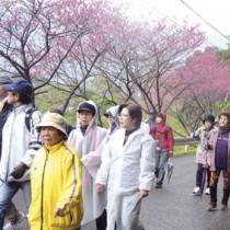 ヒカンザクラが咲く景観などを楽しみながらゴールを目指した参加者たち=8日、奄美市住用町川内