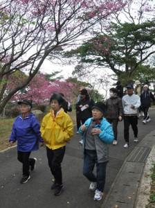 桜の花を楽しみながら思い思いのペースで歩いた参加者ら=1日、徳之島町