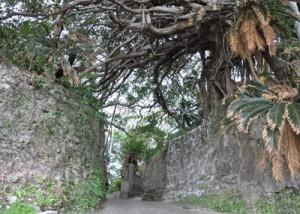 第2回「かごしま・人・まち・デザイン賞」景観づくり部門で優秀賞に選ばれた「阿権300年カジュマルと石垣の小道」