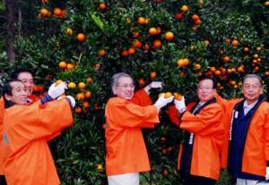鮮やかに色づいたタンカンにはさみを入れ、収穫シーズンの始まりを祝う関係者=1日、大和村福元盆地