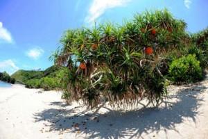 第2回宇検村フォトコンテストのグランプリ作品「Adan Tree」と準グランプリ作品の「大潮に現るマイクロアトール」