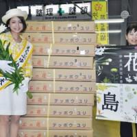和泊町「えらぶゆり」を東日本大震災被災地へ贈る150303沖