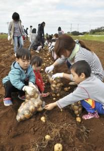 ジャガイモの収穫作業を体験したモニターツアーの参加者ら=8日、伊仙町