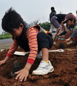丁寧にソテツを植える子どもたち=22日、和泊町畦布