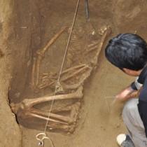 面縄第1貝塚で出土した人骨=24日、伊仙町