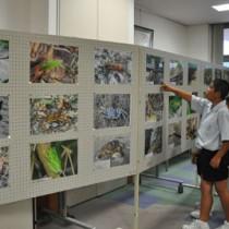 指宿安夫さんが撮影した写真110点を展示した「徳之島の動植物展」=28日、徳之島町立図書館