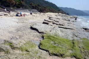 砂が激減してビーチロックが露出する大浜海浜公園の海岸線=4月25日