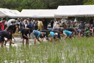 豊作祈願の歌掛けに合わせて苗を植えた手々集落の田植え祭り=19日、徳之島町