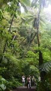 エコツアーに参加して金作原原生林を楽しむ観光客ら=4月30日、奄美市名瀬