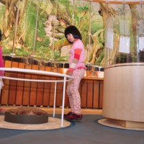 展示内容を充実し、年間利用者が1万人台に回復した奄美野生生物保護センター=大和村思勝
