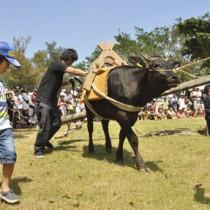 昔ながらのサタグンマの実演があった黒砂糖まつり=5日、徳之島町