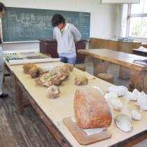 世界各地で収集されたサンゴの化石などの展示物=喜界町
