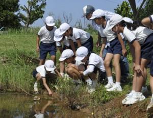 池に放したトウギョを観察する児童ら=13日、和泊町の大城小学校