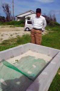 喜界島でのウミガメ産卵、ふ化環境保全話題(ふ化場写真) 丸山