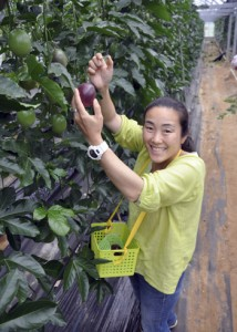 パッションフルーツを収穫する籾山さん。「等身大の島暮らしが移住者の参考になれば」と話す=5日、瀬戸内町嘉鉄