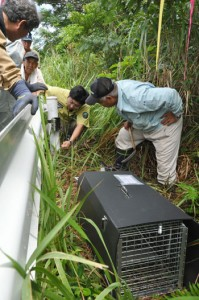 ノネコ捕獲用のかごわなと自動撮影カメラを設置する関係者ら=21日、徳之島町