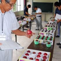 果皮の色など外観を見比べる審査員=3日、奄美市名瀬の県農業開発センター大島支場