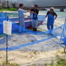 アオウミガメの産卵場所に保護用の囲いを設置する興会長や市職員=16日、奄美市名瀬