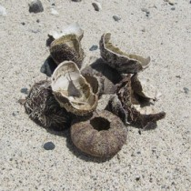 不法投棄されたウニの殻=7日、奄美市名瀬の大浜海浜公園
