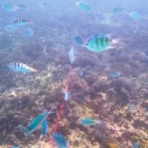 魚の群れなども確認できた観察会=7月28日、与論町のウドノスビーチ沖