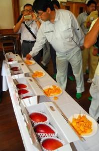 5市町村から22点の出品があった「第1回奄美大島・喜界島マンゴー品評会」=5日、奄美市名瀬朝戸の農業研究センター
