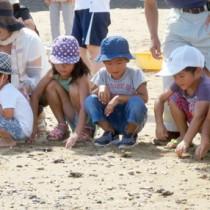 海に向かう子ガメの背中を見守る児童たち=9日、奄美市笠利町屋仁