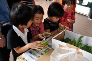 子どもたちに人気だったカイコと触れ合うコーナー=30日、鹿児島市本港新町